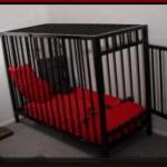 Logo du groupe séquestration momification  cage perte de liberté ect ...